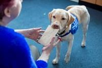Support Dogs Information Day